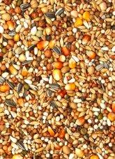 semillas palomas