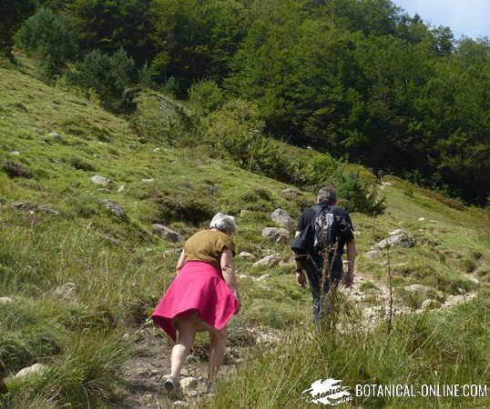 ejercicio físico senderismo