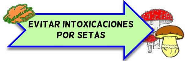 como prevenir intoxicacion por setas