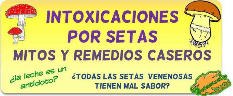 intoxicaciones setas remedios caseros antidoto