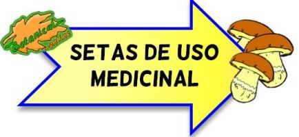 setas uso medicinal