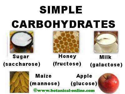 Characteristics Of Carbohydrates