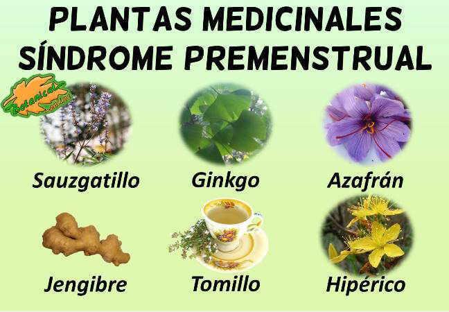 sindrome premenstrual tratamiento natural con plantas medicinales para el dolor menstrual sindrome premenstrual dolor ovarios regla menstruacion