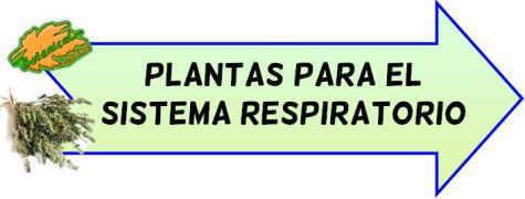plantas sistema respiratorio