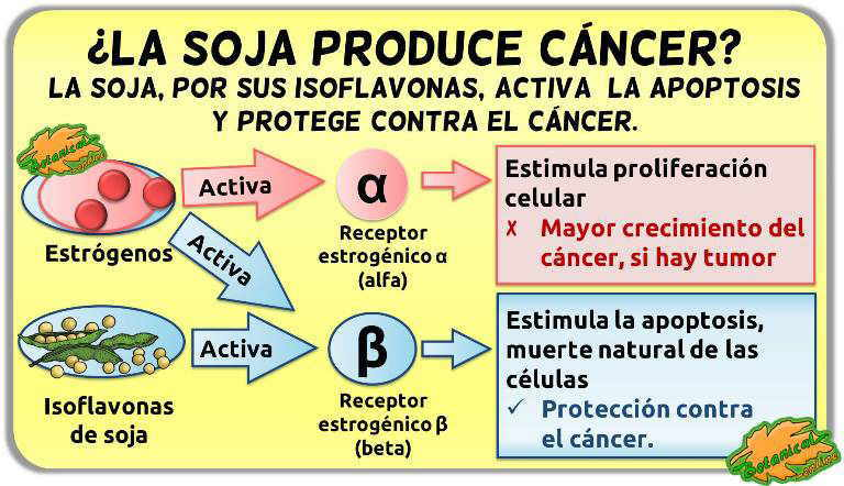 soja efectos cáncer de mama utero prostata