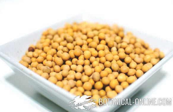 soja amarilla en grano