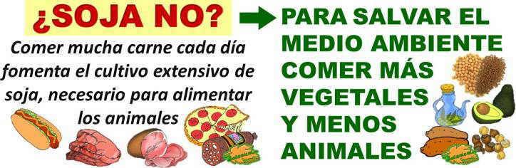impacto ecologico de la carne para alimentar animales y personas, dieta vegetariana