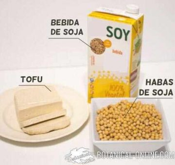 productos de soja: tofu bebida soja habas soja
