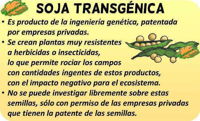 soja transgenica