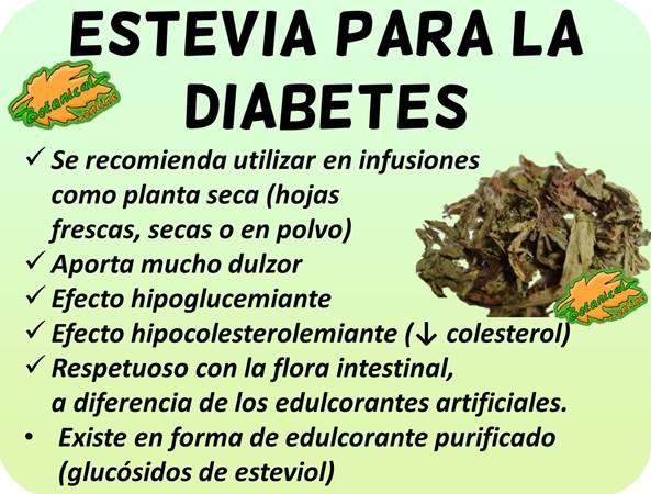 propiedades stevia para la diabetes