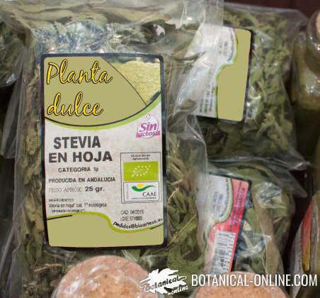 stevia planta dulce