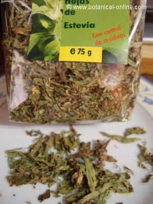 Hojas secas de stevia