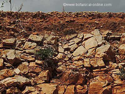 suelo sobre roca