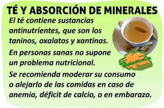 antinutrientes del te verde negro y absorcion de minerales