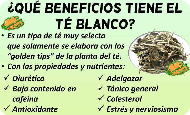 propiedades medicinales del te blanco y beneficios