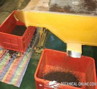 proceso de fabricación del té cedazo clasificacion