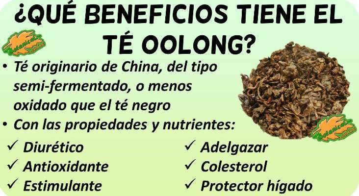 propiedades medicinales del te oolong y beneficios