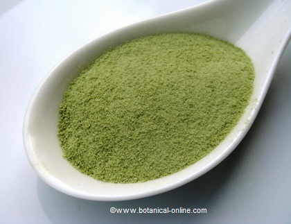 Matcha tea or green powder tea