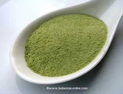 Té matcha o té verde en polvo