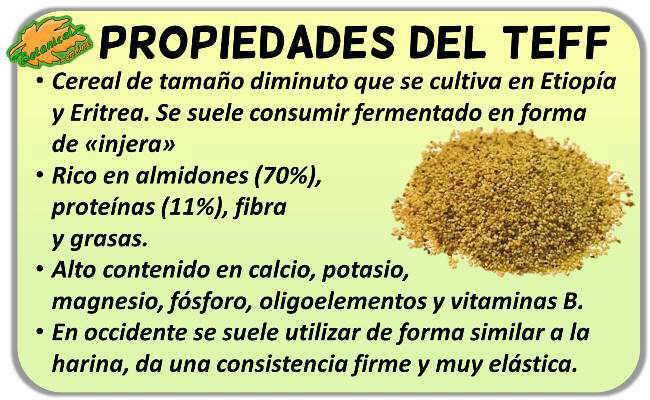 propiedades del cereal teff y sus beneficios