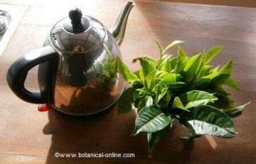 Infusión de té