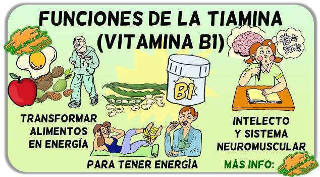 propiedades funciones tiamina vitamina b 1