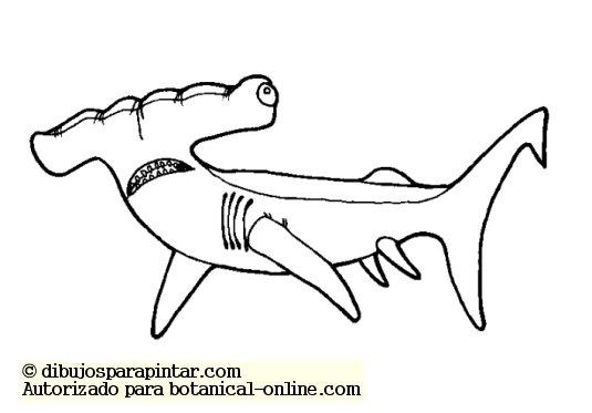 Características De Los Tiburones Botanical Online