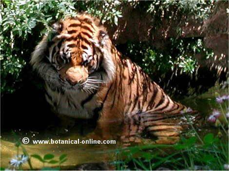 Imagenes De Animales Carnivoros Herbivoros Y Omnivoros