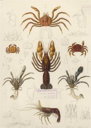 tipos-crustaceos