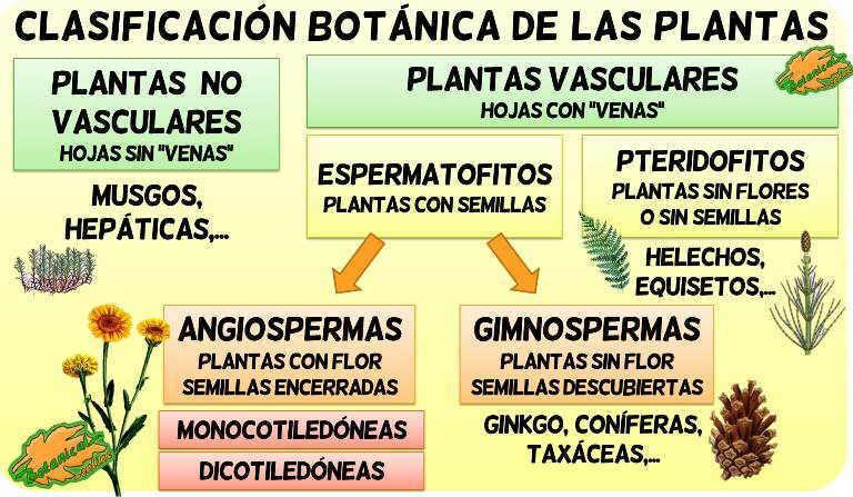Tipos De Plantas