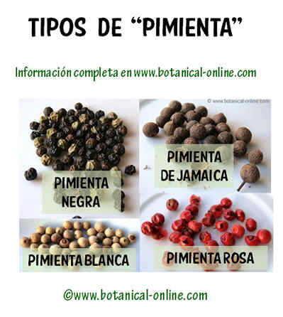 Tipos de pimienta
