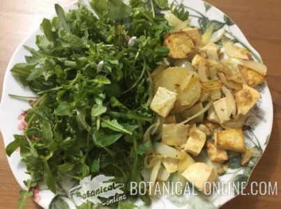 ensalada plantas silvestres con tofu