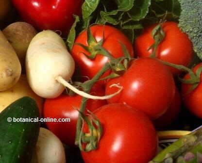 Tomate y vegetales