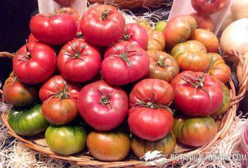 Licopeno en los tomates