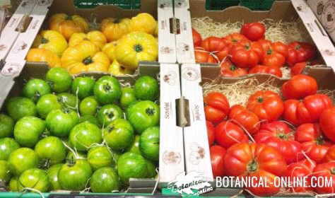 tomates colores distintos