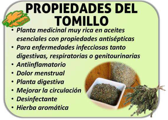 propiedades del tomillo beneficios thymus vulgaris