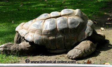 tortuga gigante 4