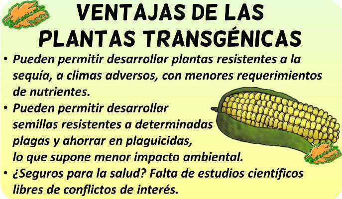 transgenicos buenos beneficios ventajas debate