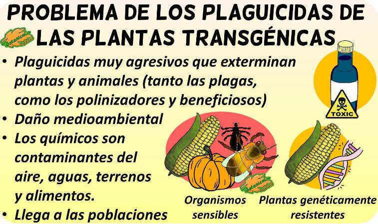 plaguicidas pesticidas transgenicos malos inconvenientes debate