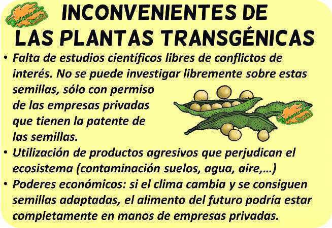 alimentos transgenicos peligros malos debate