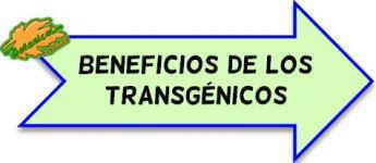 ventajas beneficios debate alimentos transgenicos