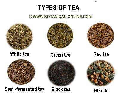 antioxidant activity of different indian green teas Antioxidant activity of black tea vs green tea  however, the concentration of diverse antioxidants in the different teas should be first considered before .