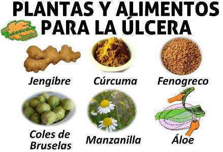 tratamiento natural con alimentos y plantas para la ulcera de estomago