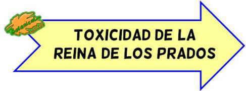 toxicidad ulmaria