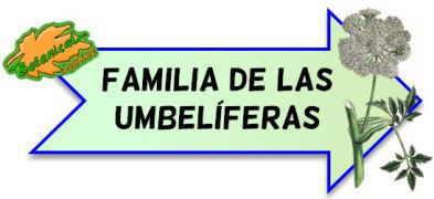 familia botanica umbeliferas