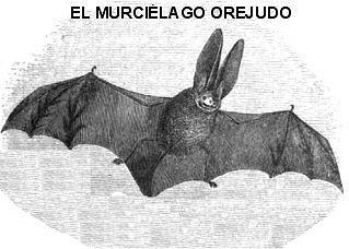 ursiela-ouejud