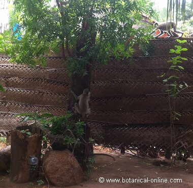 coconut palm fence