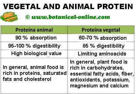Vegetable Foods High In Protein