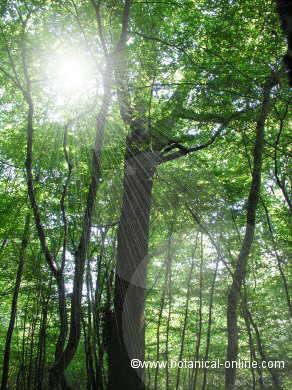 bosque con rayos de luz