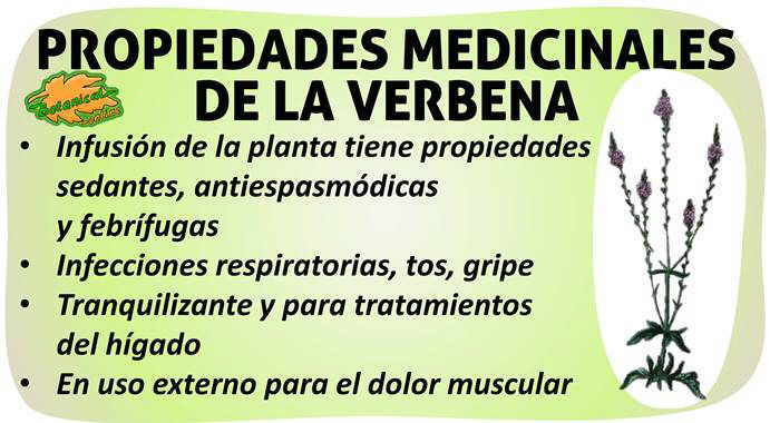 propiedades verbena officinalis planta medicinal